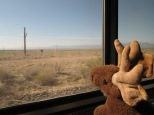 My travel companion looks out over the plains.