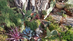 Some of the Prickly Pears