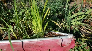 The Canoe from our childhood got re-purposed as a garden-design element.