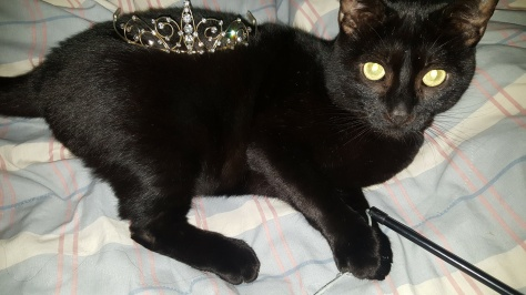 One of the challenges was to wear a tiara in public.. Midnight Monster was not terribly excited by it!