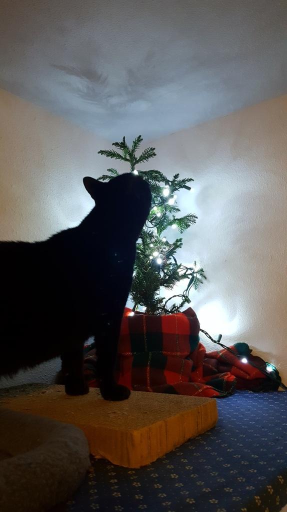 Midnight Monster investigating the Christmas Tree.