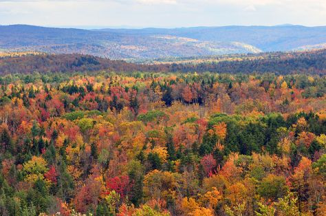 800px-Vermont_fall_foliage_hogback_mountain