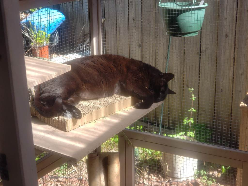 A black cat resting on a catio shelf, taking in some sun.