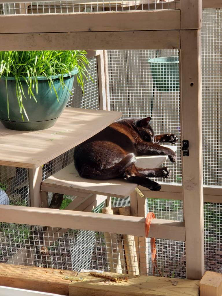 Black cat resting on a catio shelf in the sun.